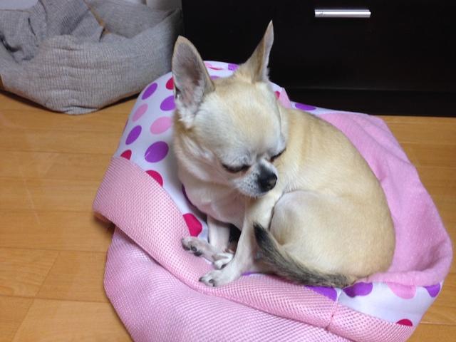 2014.12.25.2.JPG